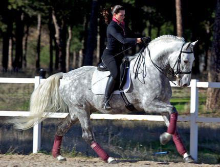 Лошади Андалусии