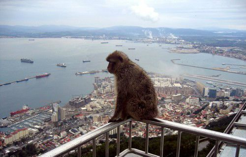 Групповая экскурсия в Гибралтар из Торремолиноса