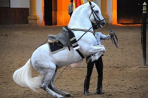 Как танцуют лошади Андалусии
